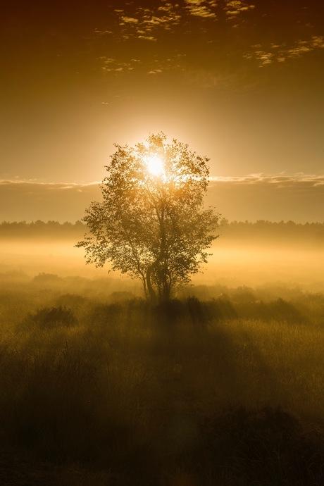 Een gouden zonsopkomst