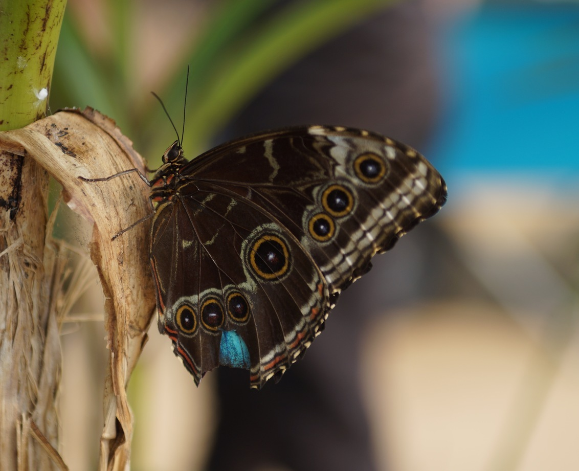 Vlinder - - - foto door Sonyjoenka op 06-09-2017