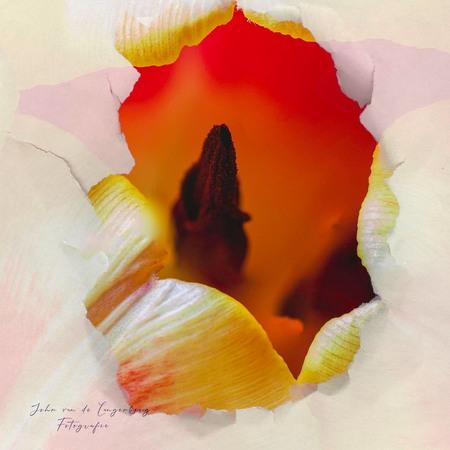 Ingepakt - Feedback op compositie wordt zeer gewaardeerd. - foto door lang op 02-03-2021 - deze foto bevat: groen, rood, macro, bloem, lente, natuur, geel
