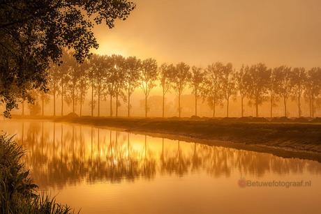 I love the Morninglight..............