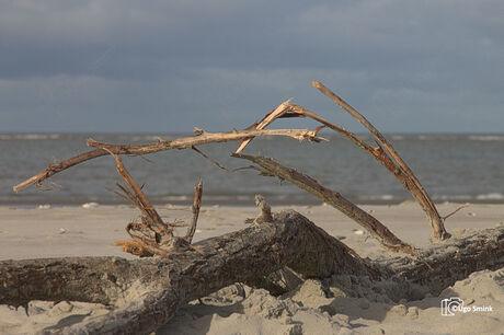 Boomtak op strand