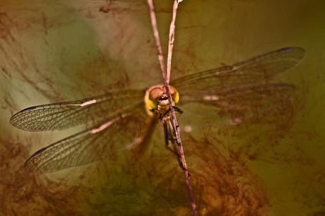 Nature Art 2012 -1