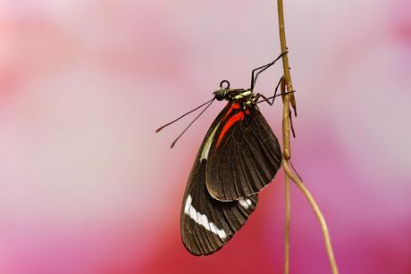 Vlinder in focus