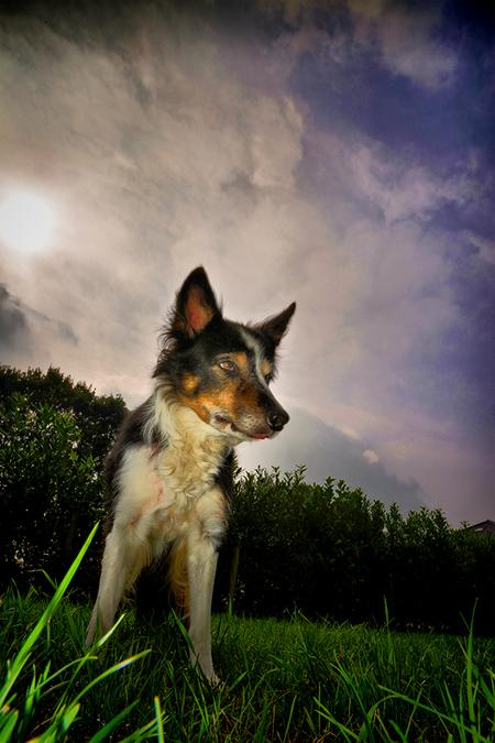 Border Collie - Een van de honden van Kairos-Kyno,kinderbegeleiding Breda - foto door egonzitter op 27-09-2013 - deze foto bevat: hond, Border Collie