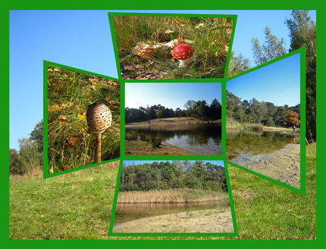 Groene natuur