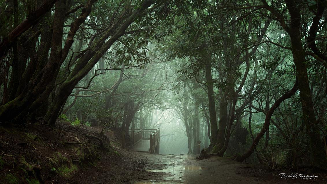 Moody forest - - - foto door steinmann.rp op 06-04-2020 - deze foto bevat: groen, boom, natuur, druppel, licht, blad, vakantie, landschap, mist, bos, zomer, bomen, bergen, tenerife, mercedes, moody, anaga