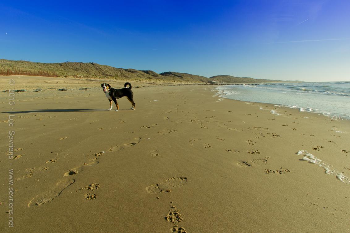 Lonely Ranger - Lonely ranger on the beach. - foto door lucsevriens op 14-12-2013 - deze foto bevat: strand, zee, zoutelande