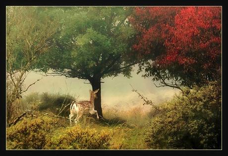 On a misty morning...