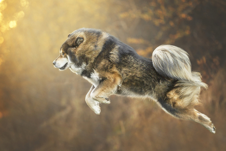 Flying lion