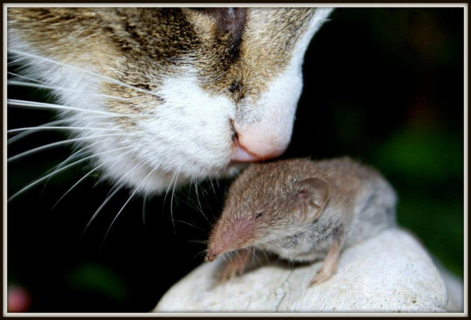 Deze kat heet Muis - Muis met muis - foto door ewelia op 22-12-2012
