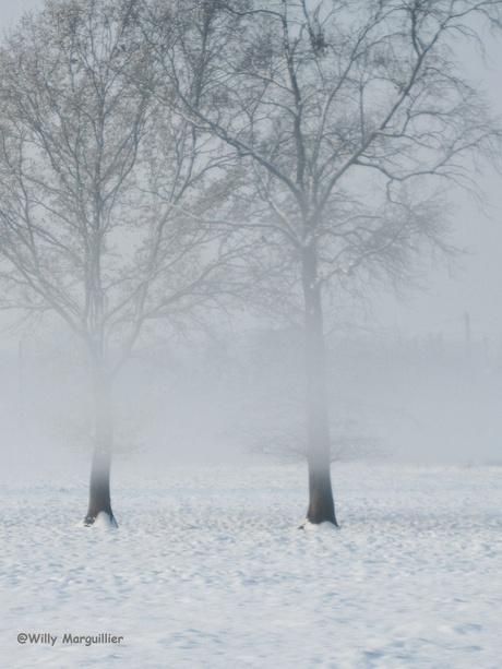 Sneeuwlandschap in de mist