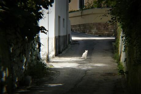 bocht met kattenogen