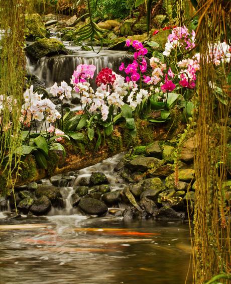 Orchideeënjungle