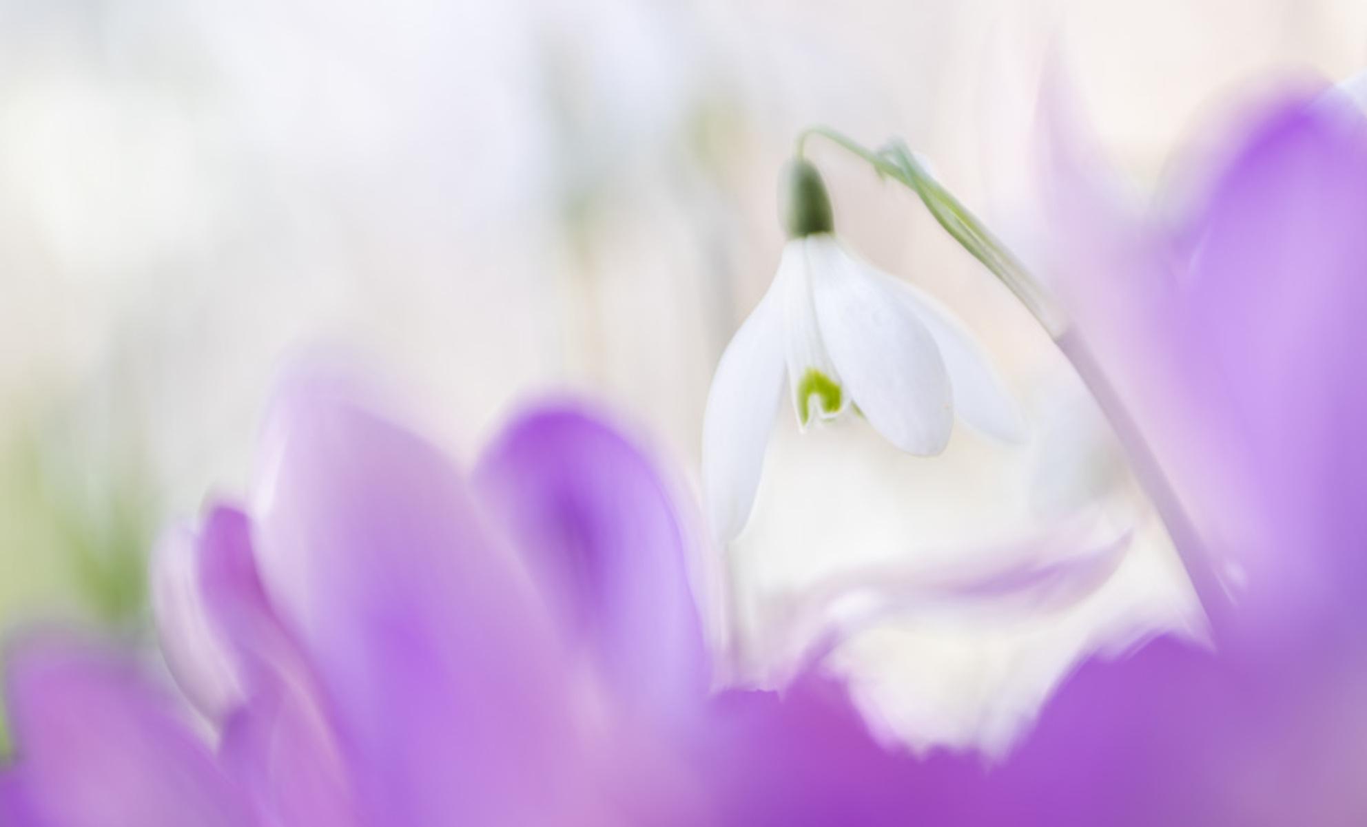 color purple - - - foto door tineke1 op 26-02-2021