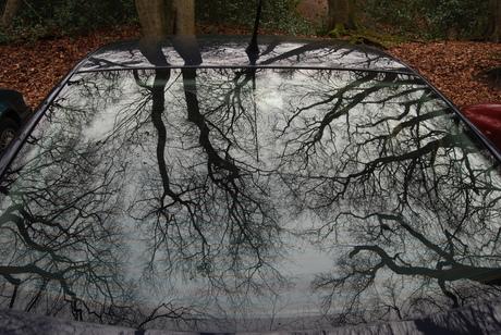 bomen weerspiegeld in auto