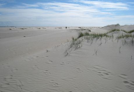 Texels landschap 2