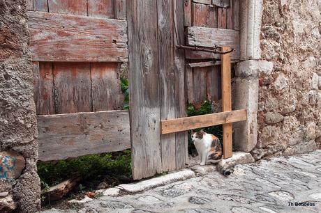 deur met kattedoorgang 1509054600Rmw