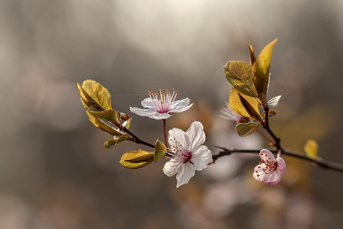 De natuur ontwaakt! - De natuur ontwaakt uit haar winterslaap, zo mooi om al die fijne en kleine bloemetjes te zien uitkomen.   Iedereen bedankt voor de fijne reacties b - foto door Dodsi op 25-03-2021 - deze foto bevat: groen, macro, bloem, lente, natuur, bruin, licht, voorjaar, bloesem, bokeh