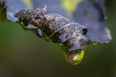herfstblad met druppel
