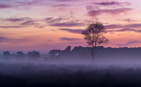 Strabrechtse Heide 186 - Tja, en dan loop je de Strabrechtse Heide op in de richting van het Grafven en dan ineens lijkt het of er een schilder met een paar snelle bewegingen - foto door Deshamer op 27-01-2016 - deze foto bevat: lucht, wolken, paars, zon, natuur, licht, ochtend, winter, landschap, mist, heide, bos, zonsopkomst, bomen, silhouet, schilderachtig, grafven, lange sluitertijd, Strabrechtse heide