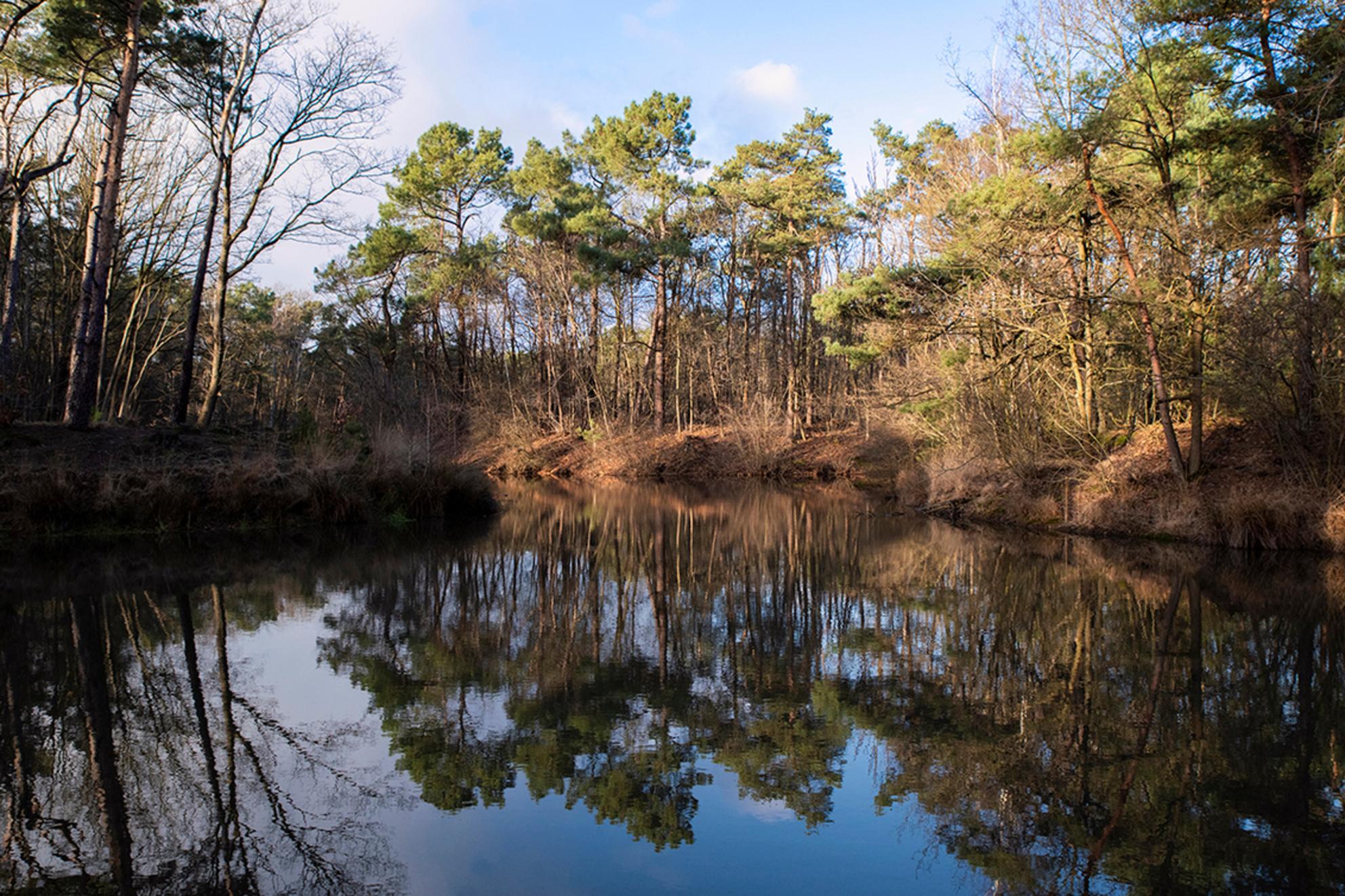 Nationaal park Loonse en Drunense duinen 2 - - - foto door elshout1958 op 28-02-2021 - deze foto bevat: water, natuur, spiegeling, landschap, bos, bomen - Deze foto mag gebruikt worden in een Zoom.nl publicatie