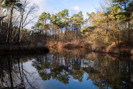 Nationaal park Loonse en Drunense duinen 2 - - - foto door elshout1958 op 28-02-2021 - deze foto bevat: water, natuur, spiegeling, landschap, bos, bomen