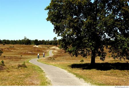 Landschap - Alvast bedankt voor jullie reactie's  Hr. Johannes - foto door cowiefotografie op 27-09-2020 - deze foto bevat: lucht, zon, natuur, vakantie, landschap, heide, duinen, bos, bomen, zand