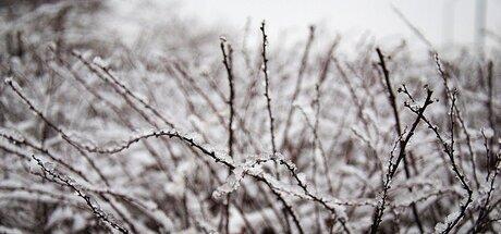 . . . Winterday . . .
