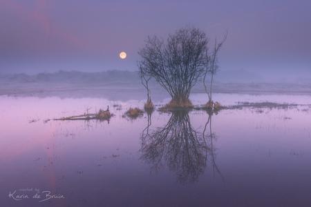 Full Moon! - - - foto door KarindeBruin op 28-02-2021 - deze foto bevat: lucht, wolken, zon, water, natuur, licht, winter, spiegeling, landschap, mist, duinen, zonsopkomst, bomen, maan, kust, lange sluitertijd