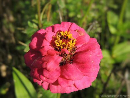 'Flower' - ... - foto door julianorbart op 28-11-2013 - deze foto bevat: roze, gras, bloem, flower