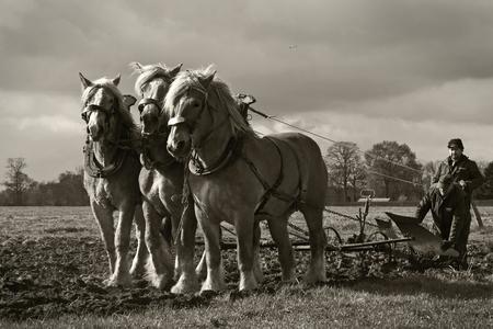 De boerenstiel 4 - Ik wil deze serie afsluiten, te veel van hetzelfde gaat langzaam vervelen he... Deze keer kon ik zelf niet kiezen, daar om plaats ik twee versies van - foto door kosmopol op 12-04-2012 - deze foto bevat: paarden, ploegen, span, kosmopol