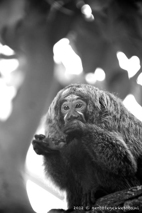 half-aap
