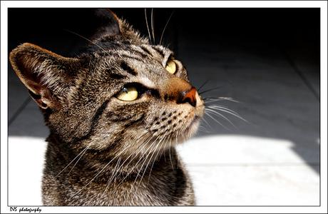 Snapshot the cat
