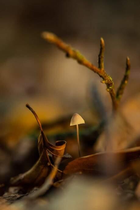 Herfst paddenstoelen
