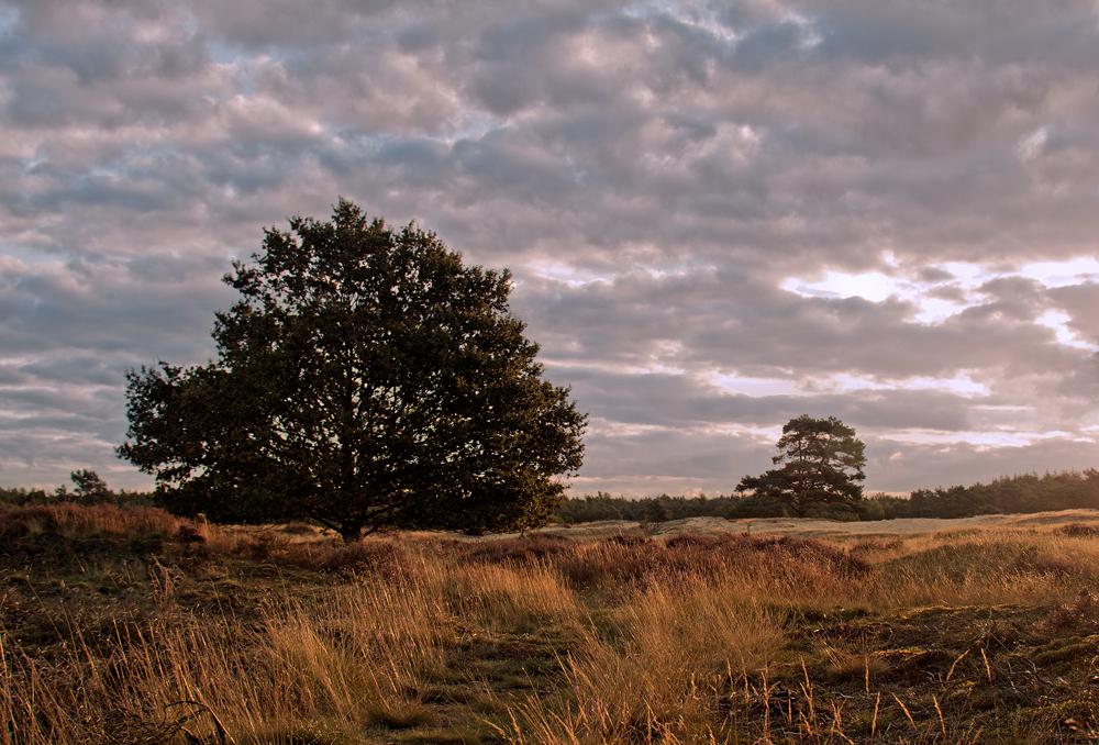 Drentse heide III - Drenthe, Drouwen, Drouwenerzand - foto door hillegonda op 19-09-2012 - deze foto bevat: natuur, avond, heide, drenthe, tegenlicht, hei, drouwen