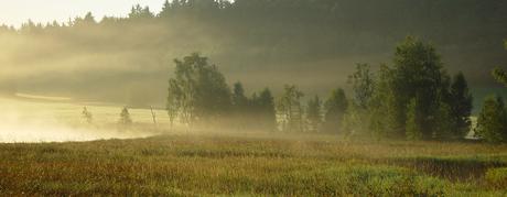 ochtendnevel, nevel, sfeerlicht, Harz