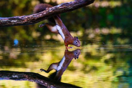 Acrobatisch eekhoorntje