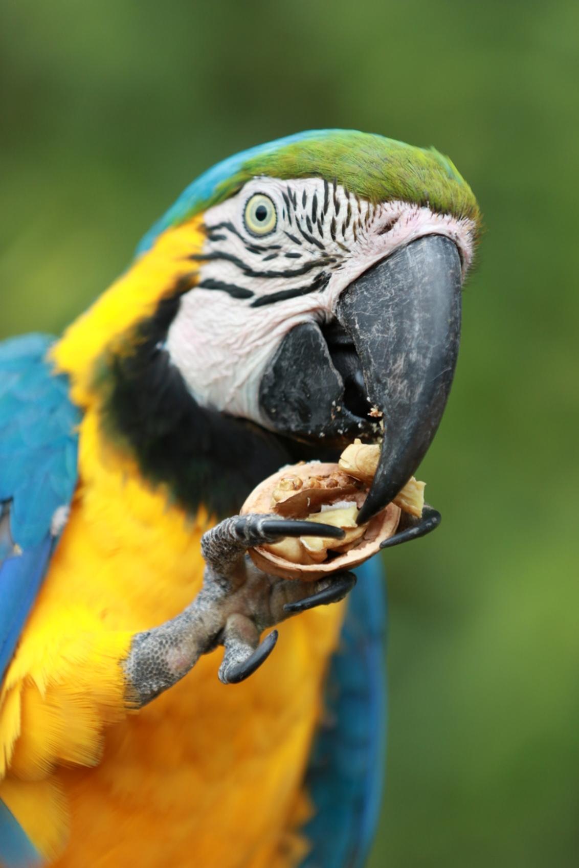 Parrot Cerza France - - - foto door VosL op 19-08-2019 - deze foto bevat: dierentuin, vogel
