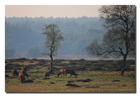 Hoge Veluwe - Gisteren een sfeeropname gemaakt op de Hoge Veluw - foto door willdekleijn op 15-04-2010 - deze foto bevat: herten, hogeveluwe, corpus