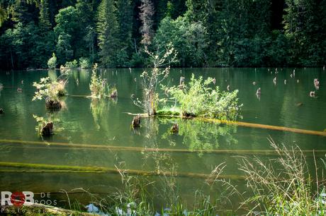 Lacul Roșu (Roemenië)
