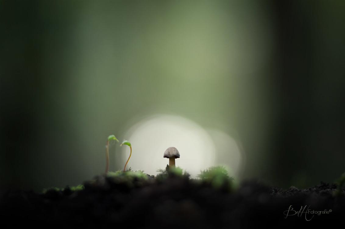 Once apon a time in a Deep Dark Forest... - Bij het vallen van de avond zag ik nog net dit tafereeltje.  Tegen het laatste licht zag ik de conversatie tussen de mosjes en dit kleine paddensto - foto door BiancadH op 16-10-2018 - deze foto bevat: groen, donker, macro, natuur, bruin, licht, paddestoel, herfst, avond, dof, bokeh