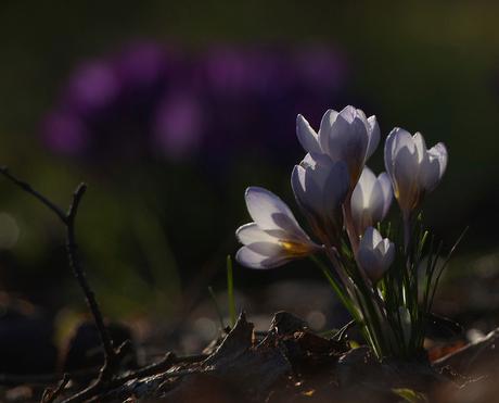 De kracht van lente kleuren straalt door naar innerlijk welzijn