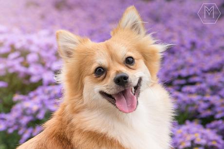 Happy dog 'Ranger'