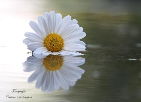Een bloem voor jou...