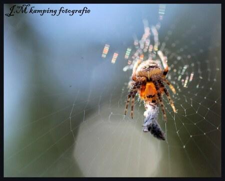 gevangen - vandaag weer ff de tuin ingedoken om teoefenen met macro.graag tips wat ik kan vebeteren.  Gr.jos - foto door darkjos op 09-04-2010 - deze foto bevat: lente, spin, tuin, prooi