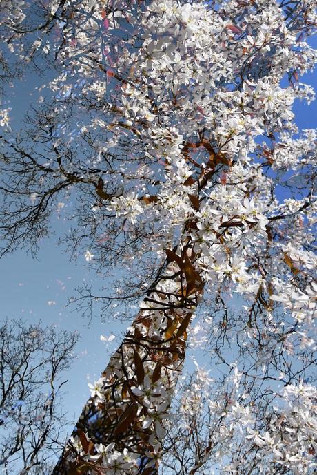 Een bijzondere boom
