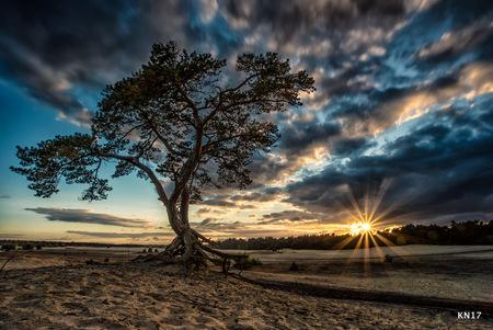 boom - Kijk dan wat een heeerlijke foto ik gister van de zonsondergang maakte. Super trots op deze foto! Ik bereid me vaak goed voor op de foto die ik wil g - foto door robinvanmaanen op 29-04-2017 - deze foto bevat: lucht, wolken, zon, strand, zee, water, dijk, vuurtoren, tulpen, panorama, lente, natuur, licht, boot, herfst, sneeuw, winter, kasteel, avond, zonsondergang, vakantie, ijs, spiegeling, landschap, mist, heide, duinen, bos, tegenlicht, zonsopkomst, bomen, kerk, storm, zand, bergen, meer, haven, pier, maan, brug, rivier, molen, nacht, kust, polder, hdr, lange sluitertijd