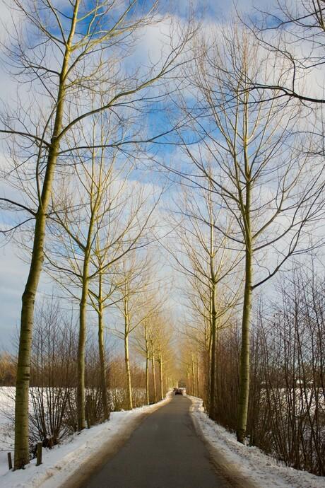 Midden op de winterdag