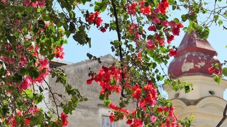 BLOEMEN - een beetje kleur in deze tijden..... - foto door jh- op 08-03-2021 - deze foto bevat: lucht, kleur, zon, boom, bloem, lente, blad, architectuur, voorjaar, kerk, gebouw, wandelen