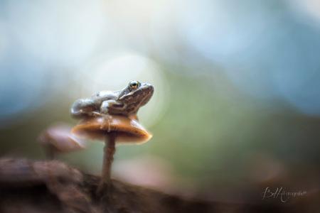 A lot of kisses - Deze foto heb ik vorig jaar gemaakt met mijn lensbaby. Dit was echt 1 van mijn grote dromen om ooit eens te mogen fotograferen.  Een moment om nooi - foto door BiancadH op 09-10-2019 - deze foto bevat: groen, macro, kikker, natuur, licht, paddestoel, herfst, dieren, bos, oog, nederland, lensbaby, bokeh